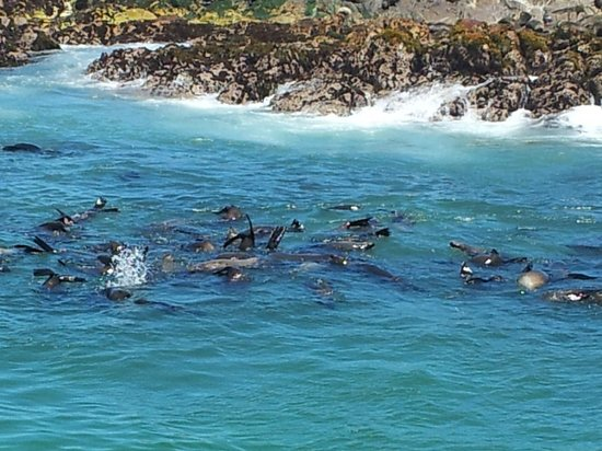 Marine Dynamics: Seal Island