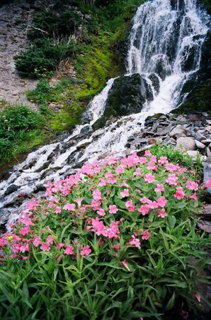 Vidae Falls located a short drive from Crater Lake lodge