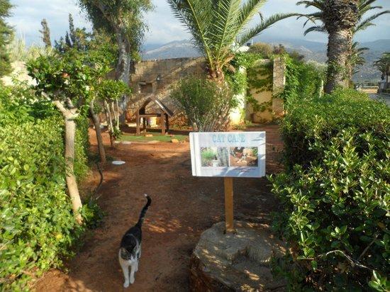 Cretan Malia Park : кафе для кошек