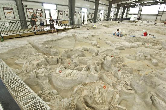 Nebraska: Ashfall Fossil Beds State Historical Park contains the fossil skeletons of animals that died at