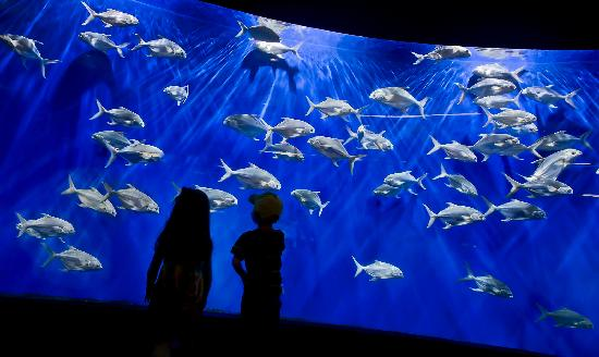 Nebraska: The Suzanne and Walter Scott Aquarium in the Omaha Henry Doorly Zoo is the largest aquarium insi
