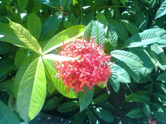 Hotel Atti : Vegetación