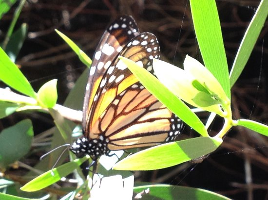 Monarch Grove Sanctuary: Another close up