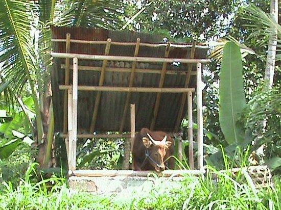 Nandini Bali Jungle Resort & Spa : Прогулка вокруг отеля
