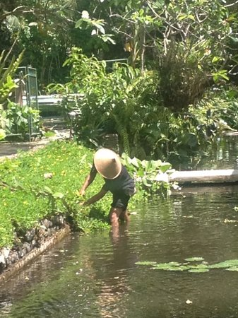Jiwa Damai Organic Garden & Retreat: Grooming the gardens
