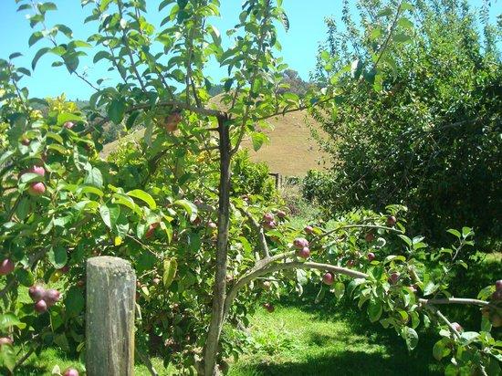 Pah Road : Orchard