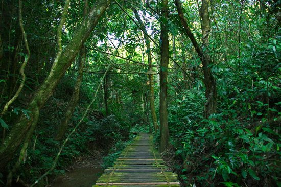Xishuangbanna Tropical Nature reserve: Trail in the Rainforest