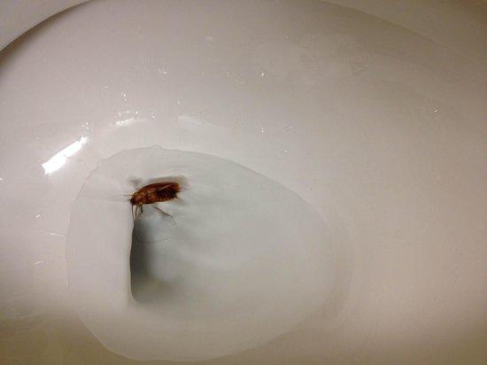 St. Vincent's Guest House: roaches