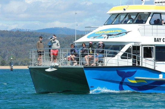 Cat Balou Cruises