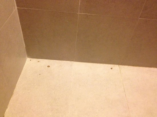 Haadtien Beach Resort: Kot von den Geckos in der Dusche nicht entfernt 8 Tage