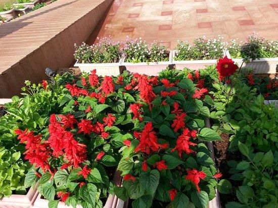 Evershine Keys Prima Resort: garden area