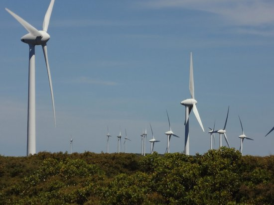 Albany Wind Farm: There's 18