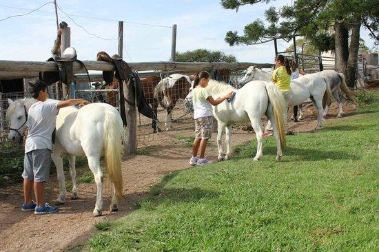 Brooloo Park Eco Retreat & Equine Resort: Natural Horsemanship & Pony riding lessons