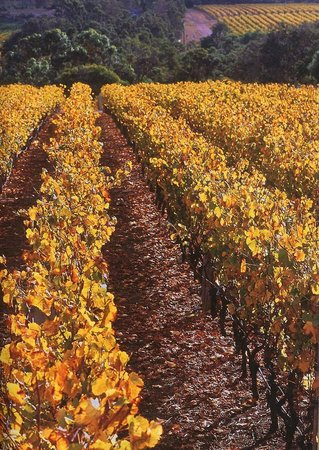 Pierro: A view of the Chardonnay and the Willyabrup Valley