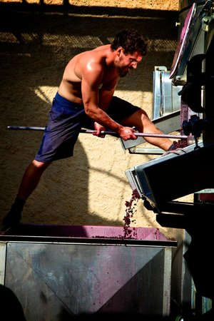 Pierro: Theo emptying the red fermenter