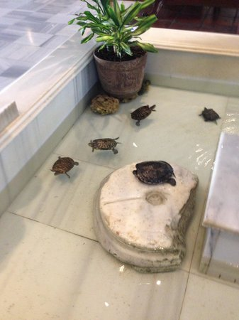 Armada Istanbul Old City Hotel: Turtle family in the foyer of the hotel