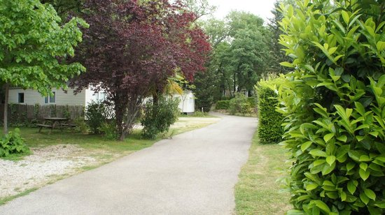 Camping Les Cent Chenes : LES ALLEES