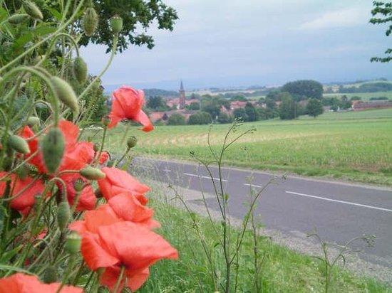 Maison des Gîtes Ungerer : Vue sur Hunspach