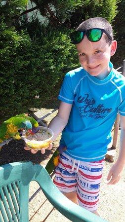 Canberra Walk in Aviary: Friendly birds
