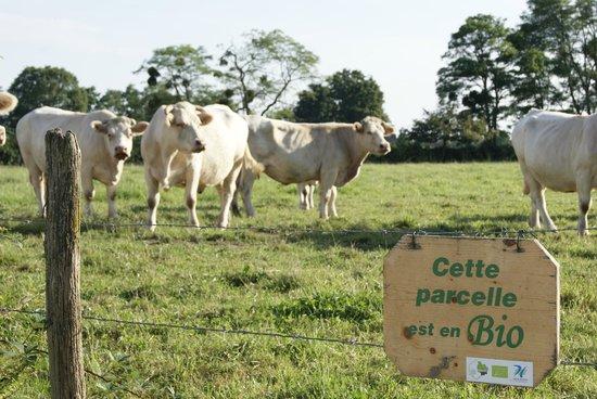 Ferme des Bruyères : Notre ferme