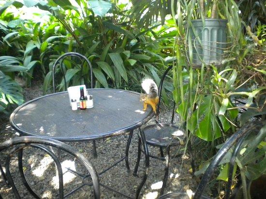 Hotel Aranjuez: Yard