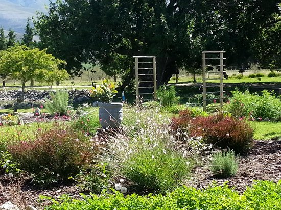 Springfontein Eats: The Herb Garden