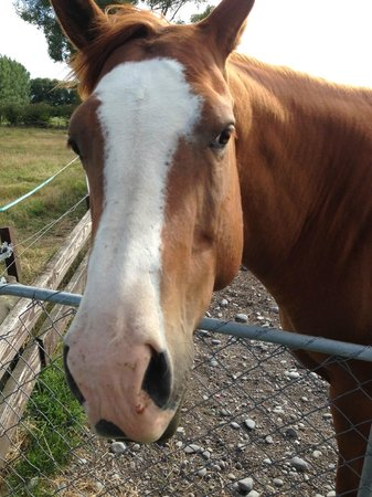 Stoneleigh Lodge: Friendly horses!