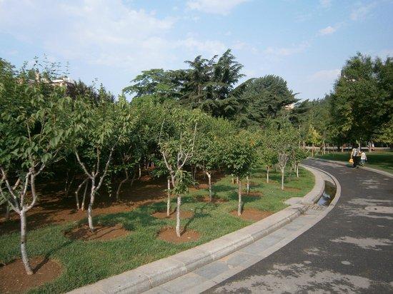 Dalian Children Park : 大連兒童公園步道
