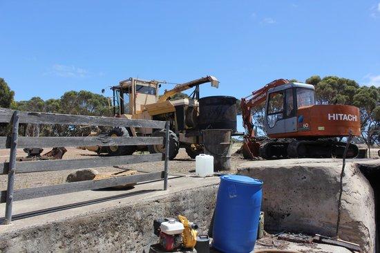 Emu Ridge Eucalyptus Oil Distillery: Eucalyptus cutting plant and distillery