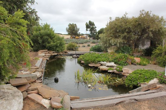 Kingscote, Australia: Pond in the garden
