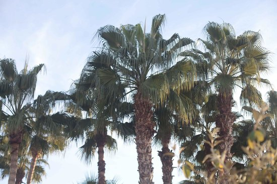 Les Jardins de la Medina: view from my hammock