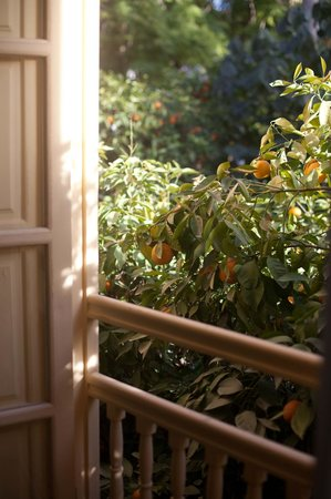 Les Jardins de la Medina: orange tree from our room window