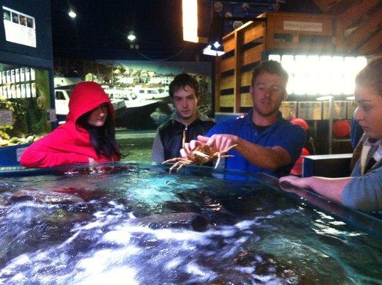 Ilfracombe Aquarium: Aquarium staff member showing students a crab