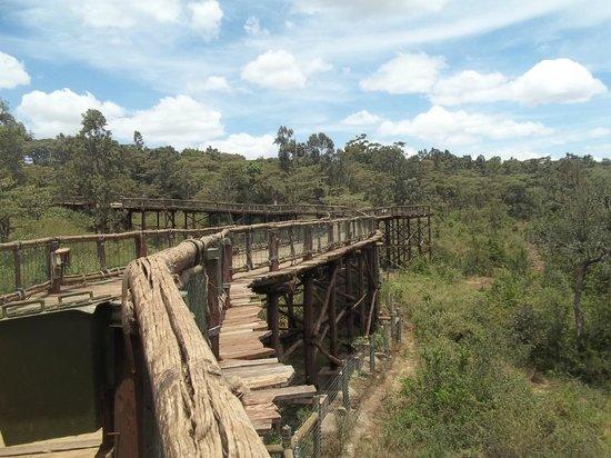 Nairobi Safari Walk: The scenery