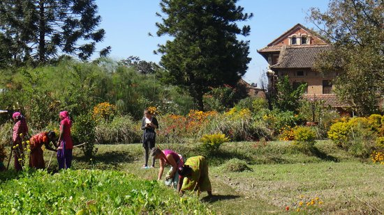 Gamcha Organic Farm & Guest House: garden