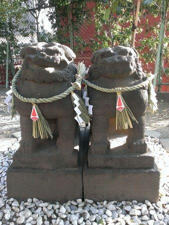 Asakusa Shrine : 寄り添う姿が本当に可愛い!!