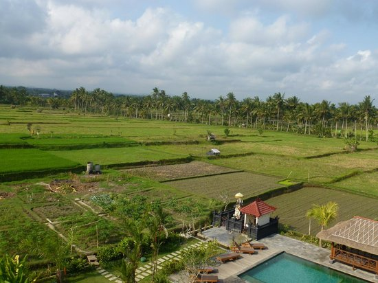 Suly Resort Yoga and Spa : Rice field view