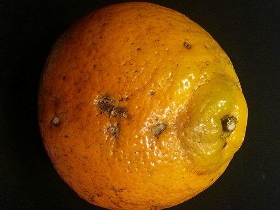Cushman's Fruit Company : Bug orange from Cushman's