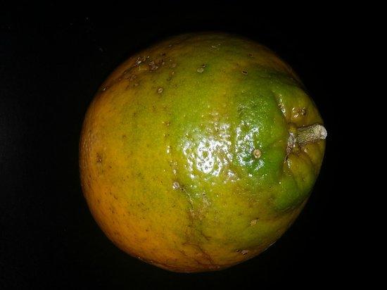 Cushman's Fruit Company: Green orange from Cushman's
