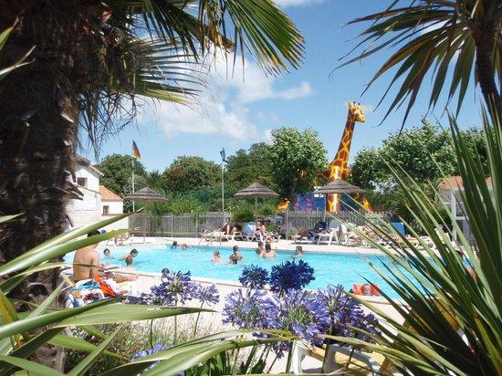 camping au pigeonnier : une piscine a taille humaine avec vue sur la girafe