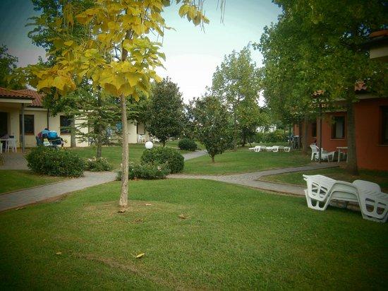 Camping Bella Italia: uno dei viali alberato
