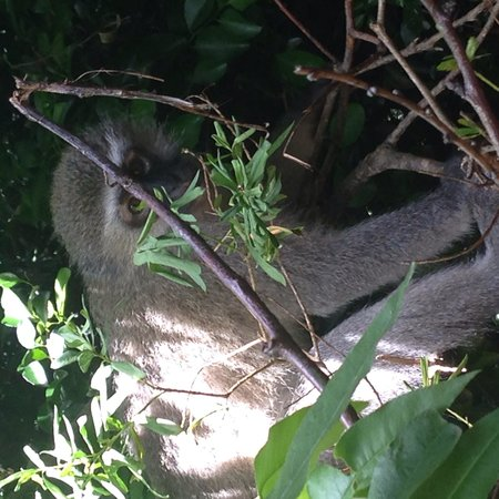 Monkeyland Primate Sanctuary: You can't see me