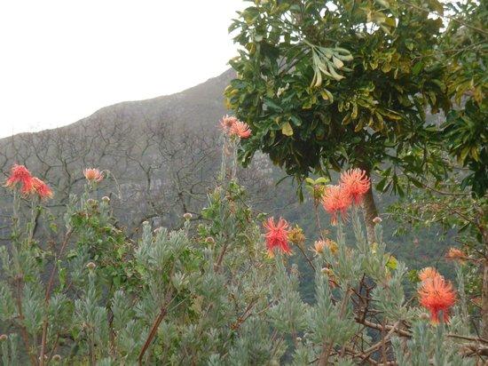 Taj Cape Town: giardino botanico