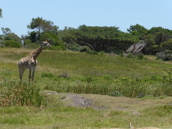 Kragga Kamma Game Park: Giraffes and zebras