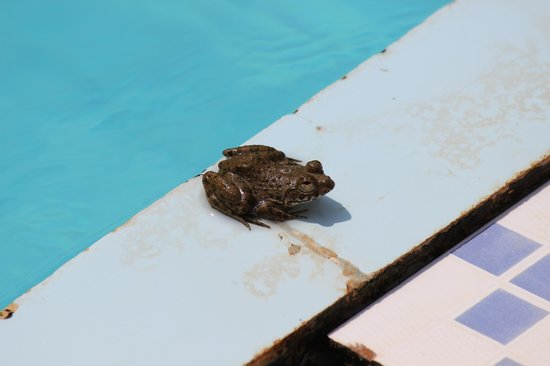 Beira Mar Alfran Resort: anothe friend loads if frogs