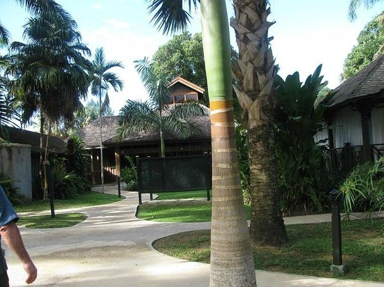 Sunset at the Palms: yard