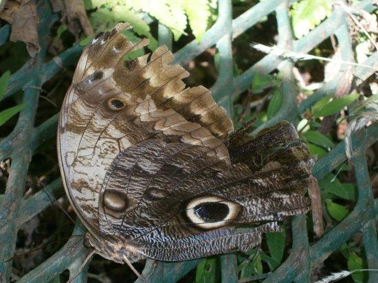 Beach Break Resort : Papillon avec imitation d'oeil de hibou.
