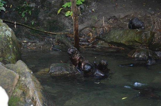 Ohau Waterfall Walk and Seal Pups: close up shot