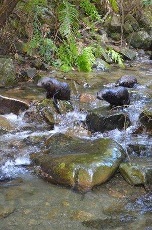 Ohau Waterfall Walk and Seal Pups: along the stream
