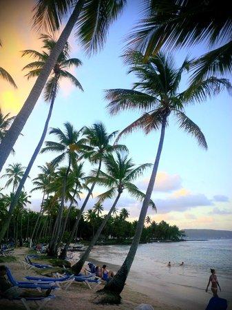 Grand Paradise Samana: Beach at sunset